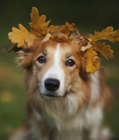 leaf crown