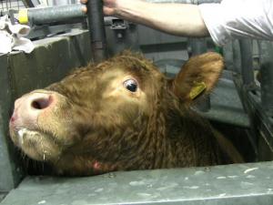 Slaughterhouse petition