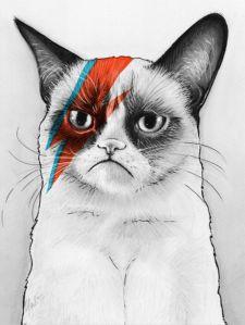 ziggy cat
