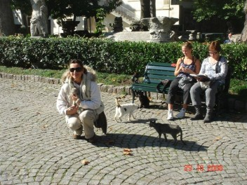 tourist-and-cats