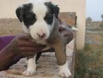 boy-puppy1