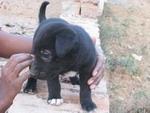 boy-puppy2