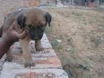 boy-puppy3