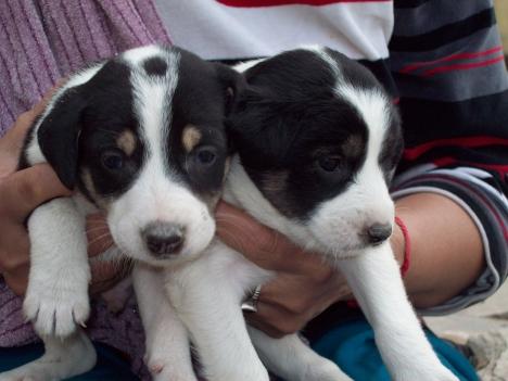 delhi-pups1