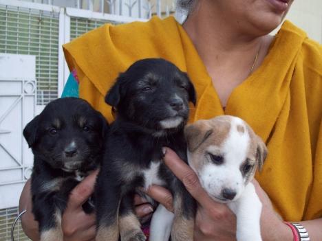 delhi-pups2