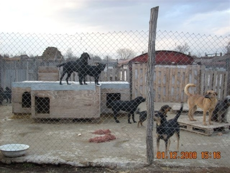 dogs-at-shelter-with-food1