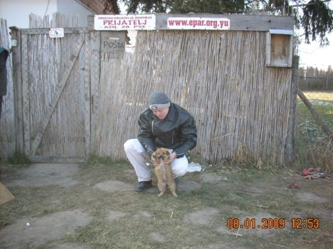 4th-puppy