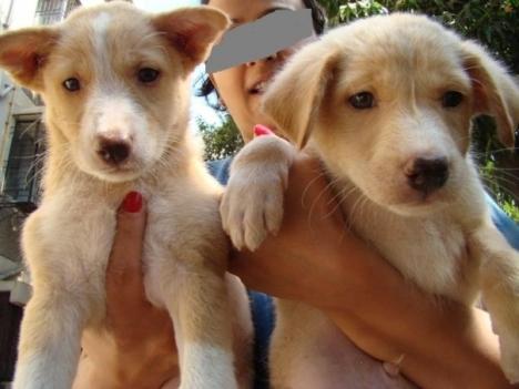 june-pups