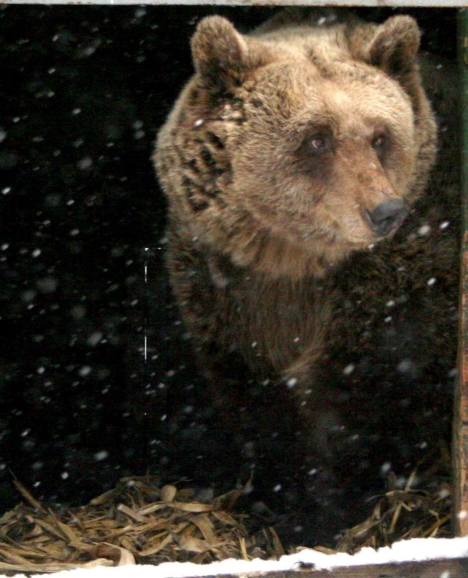 bear22