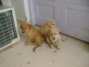 molly-and-her-pups-007