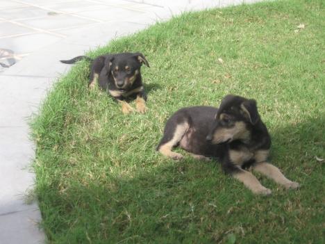 stray-pups1