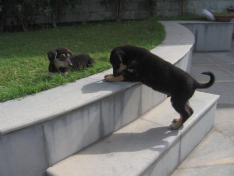 stray-pups2