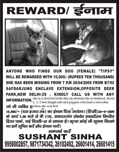 Dog Missing poster