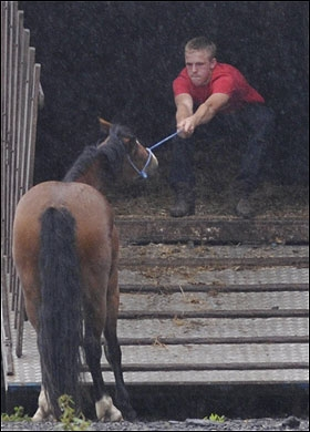 gray horse pull