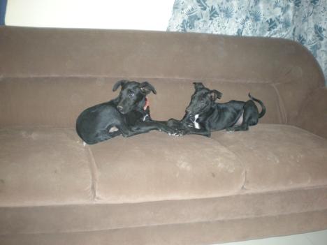 Benzie & Molly