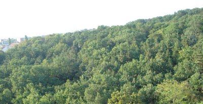 belgrade forest