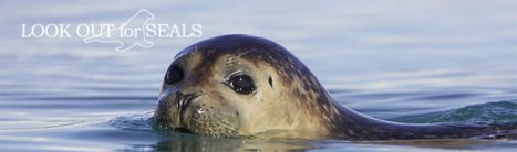 AfA Seal