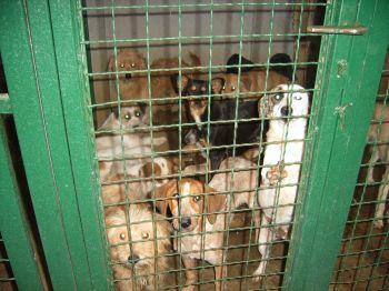 Balkans dogs