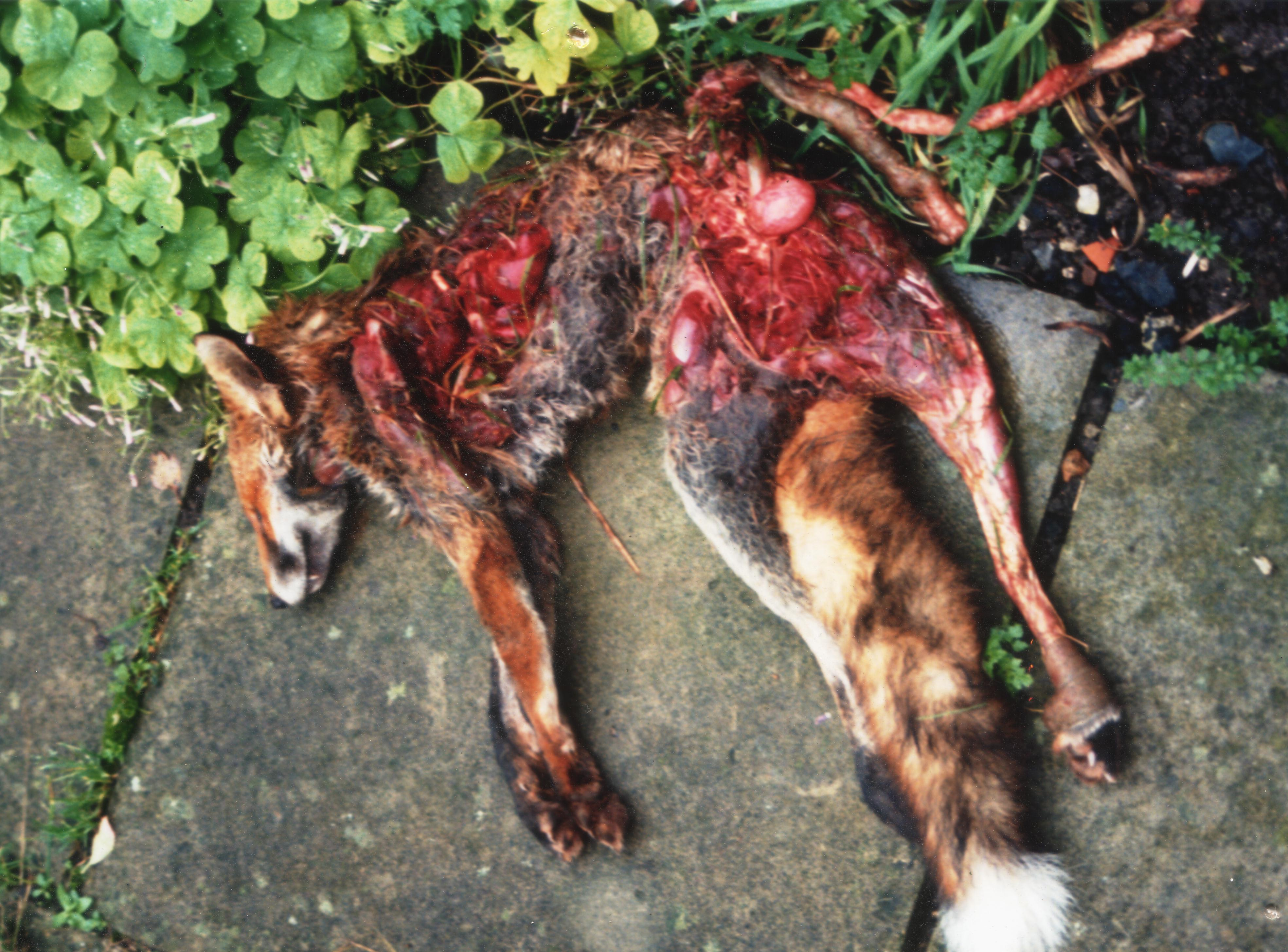 Voting conservative at the 2010 election will bring this animal abuse