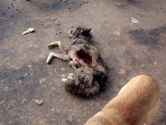 romania  please take action for strays  u2013 video  petitions