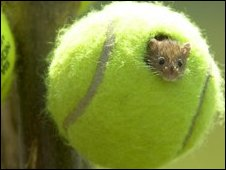 Tennis Mouse Ahhh