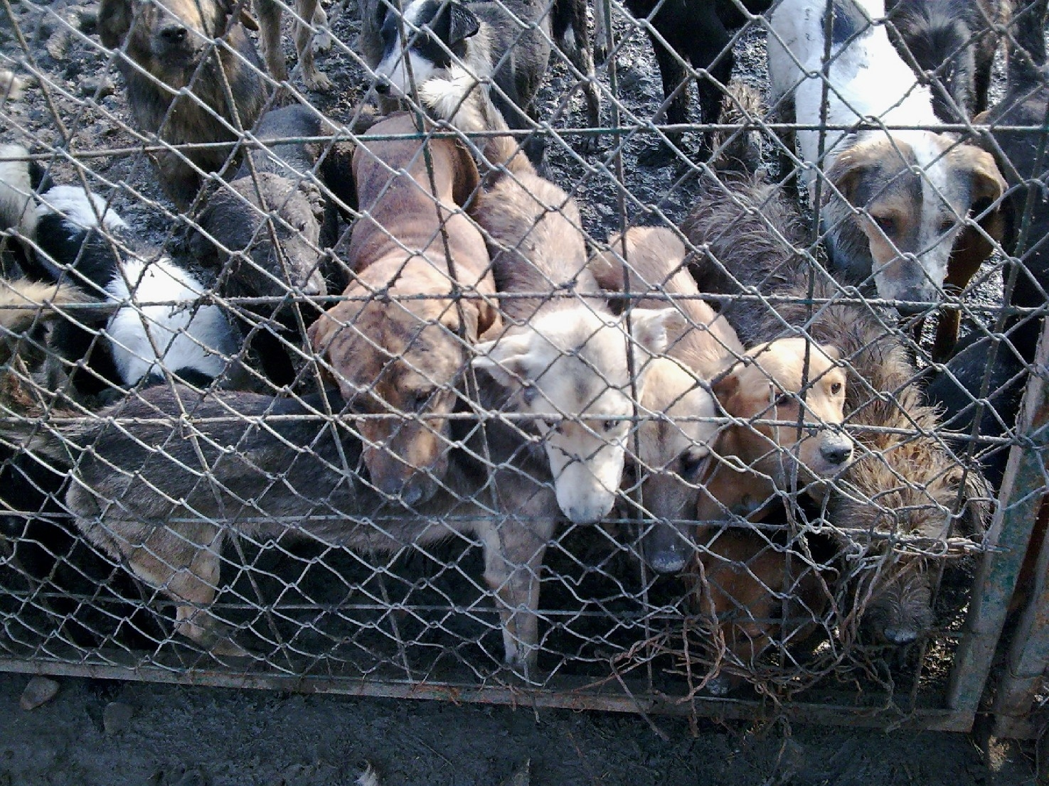 Rescue Relief For Dogs