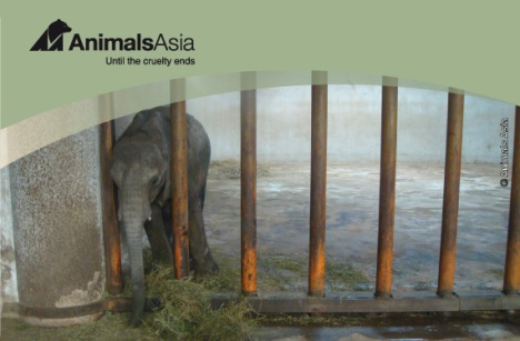Animals Asia Elephants