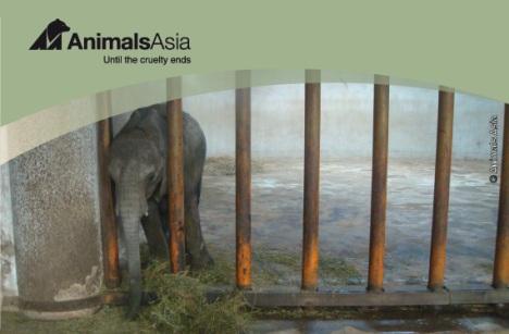 Animals Asia Elephants