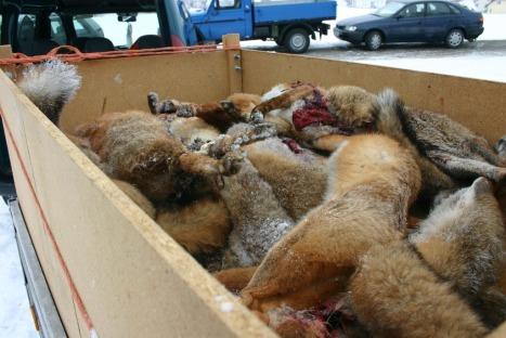 fox week 2013 2