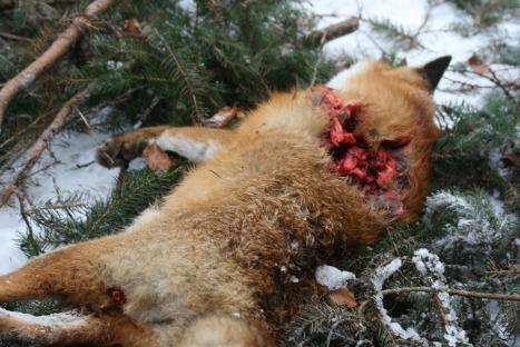 fox week 2013 8