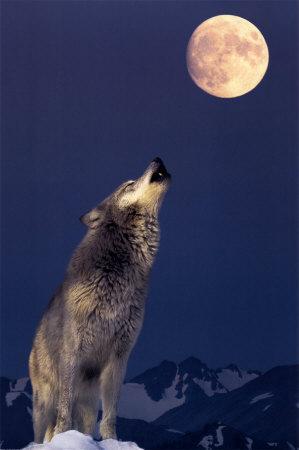Howlingwolfmoon@blueyonder.co.uk