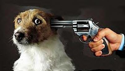 doggunhead