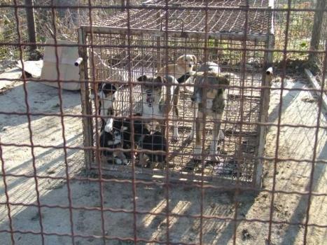 Death cage 2