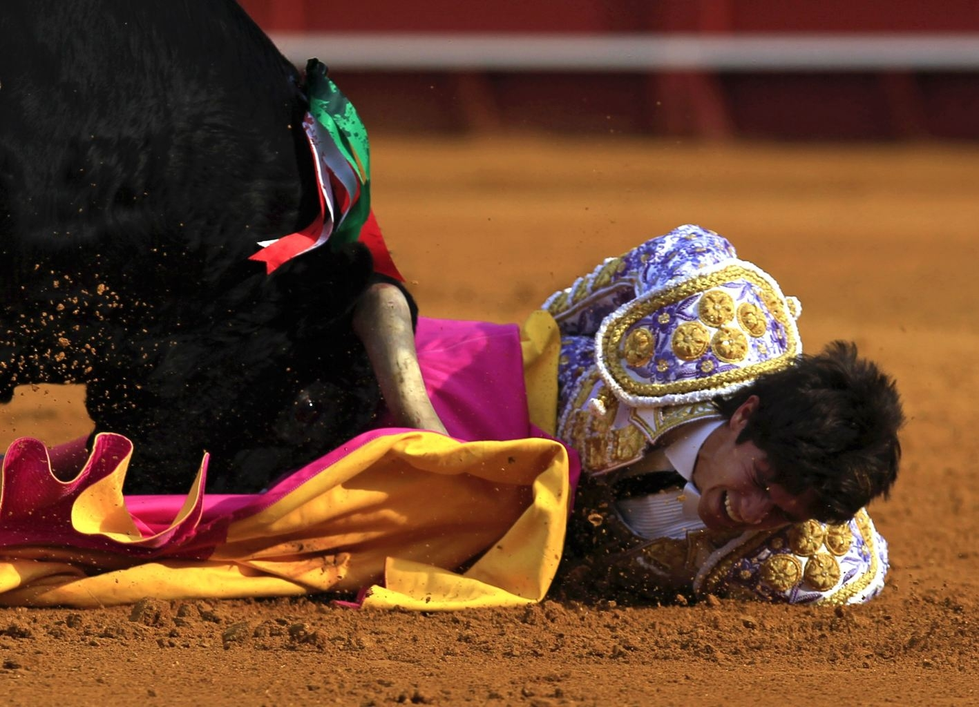 Spain Animal Abuser Matador Gets Gored By Bull Before It -6447