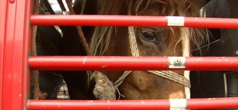 horseintransport