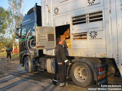 20-10-2011_XTA605-feeding (26)