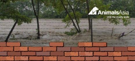 animals asia bricks