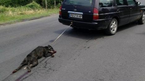 bulgaria dog drag