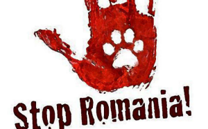 red romania 2