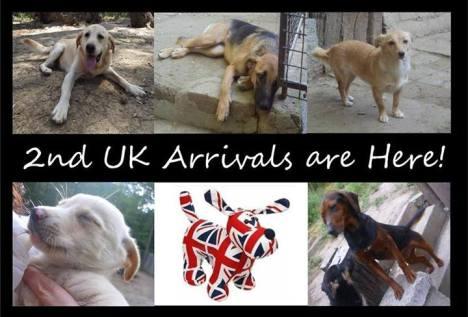 Pozega 2nd UK arrivals