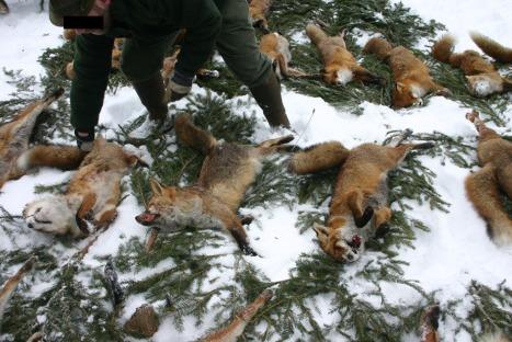fox week 2013 3