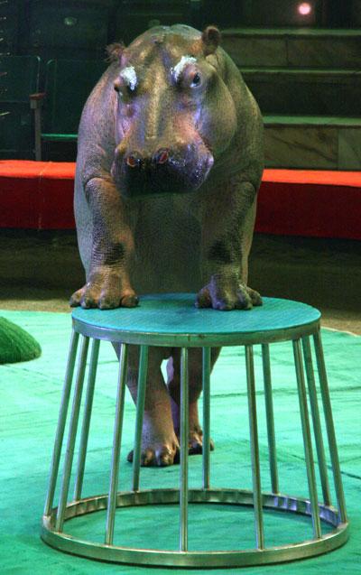 circus hippo 3