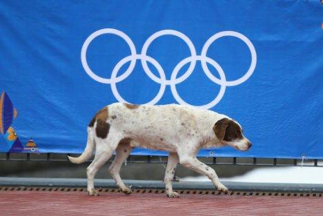 olympic dog 2