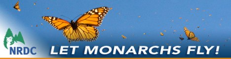 MonarchsFly-email-Banner-3-18-14