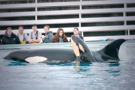 Seaworld orcas