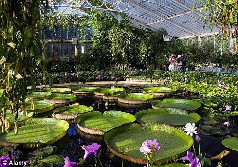 Kew-11