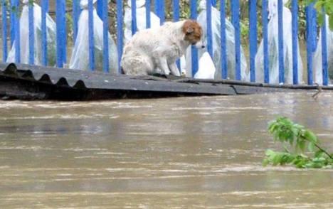 serbia flood 2