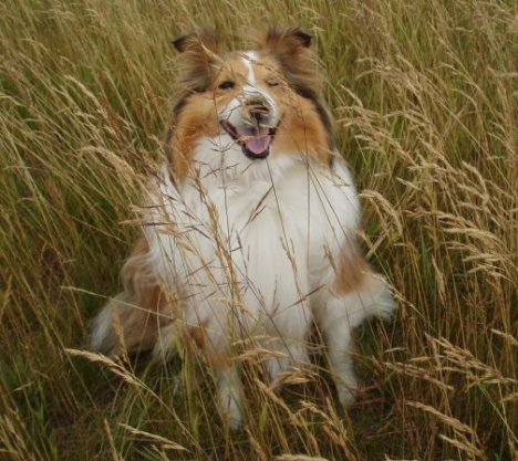 Long.grass.doggy.3