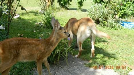 baby deer 2