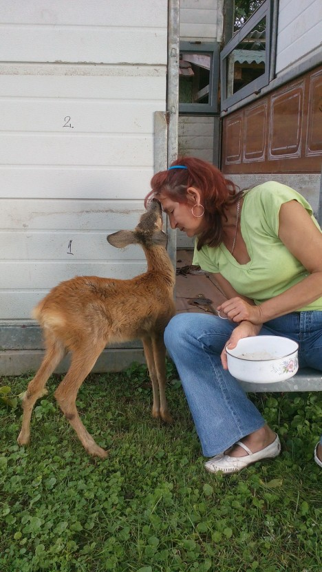 baby deer 3
